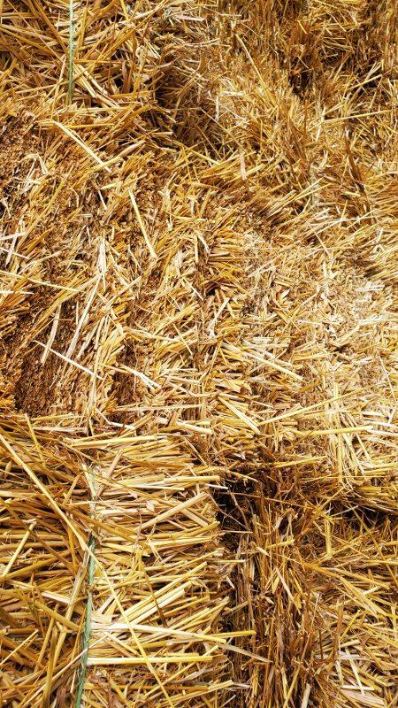 Straw Bales (450x800)